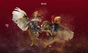 Xử phạt đối với hành vi tụ tập đá gà online trong mùa dịch tại Bà Rịa-Vũng Tàu